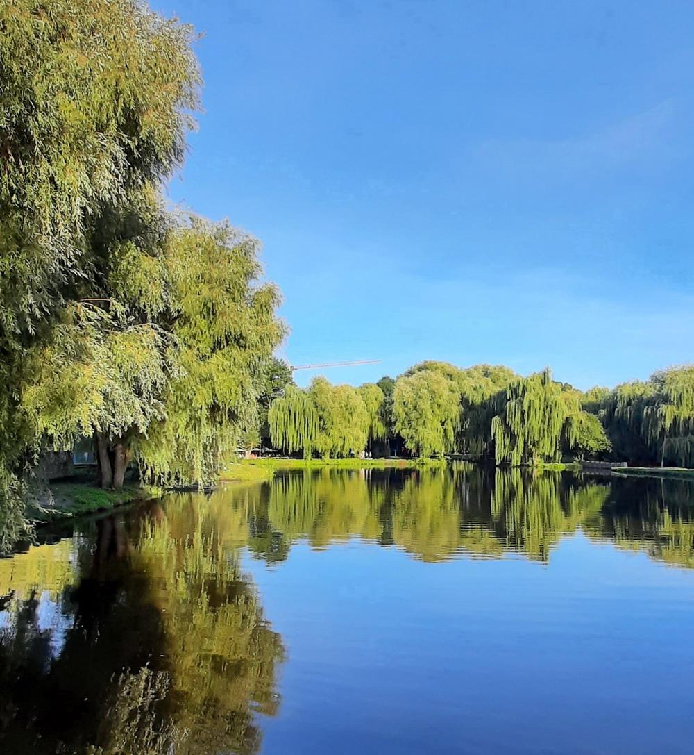Зелений Тернопіль, парк Топільче